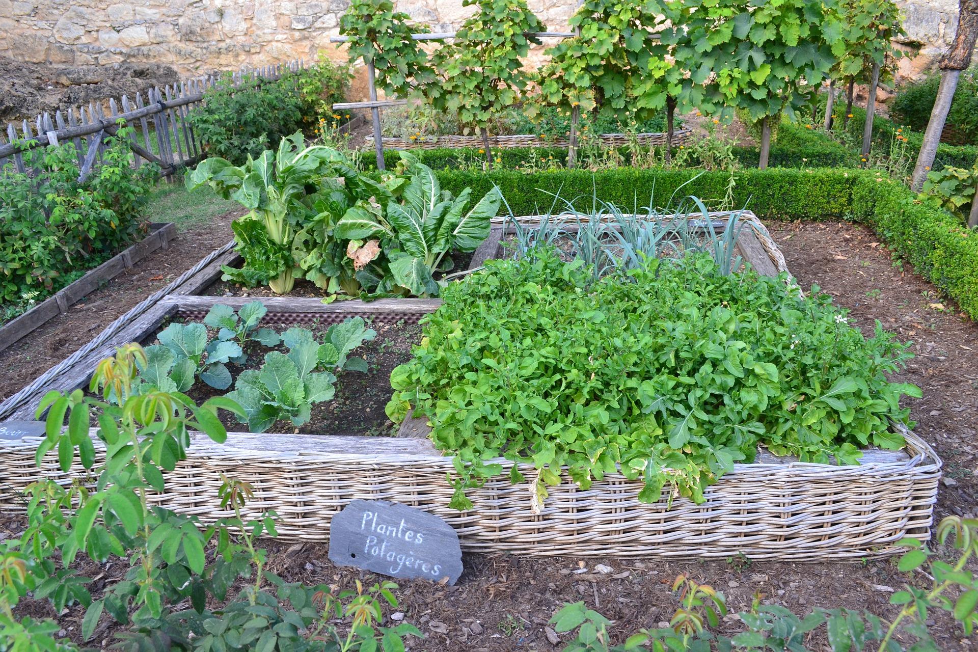 So kann ein gemischtes Beet mit Gemüsepflanzen und Blumen aussehen.